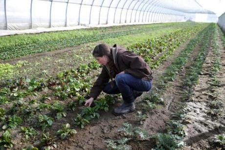 Sarah Voiland weeded at Red Fire Farm, which she runs with her husband. They are employing lean farming techniques that help farmers expand efficiently.