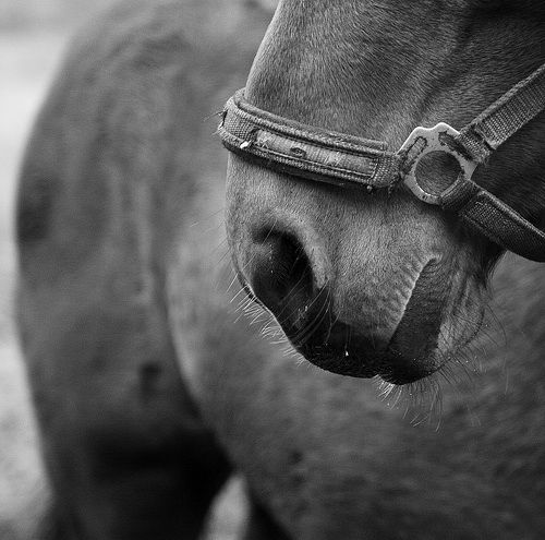 What a story professional horse photography photoposts blog beautiful horse pictures
