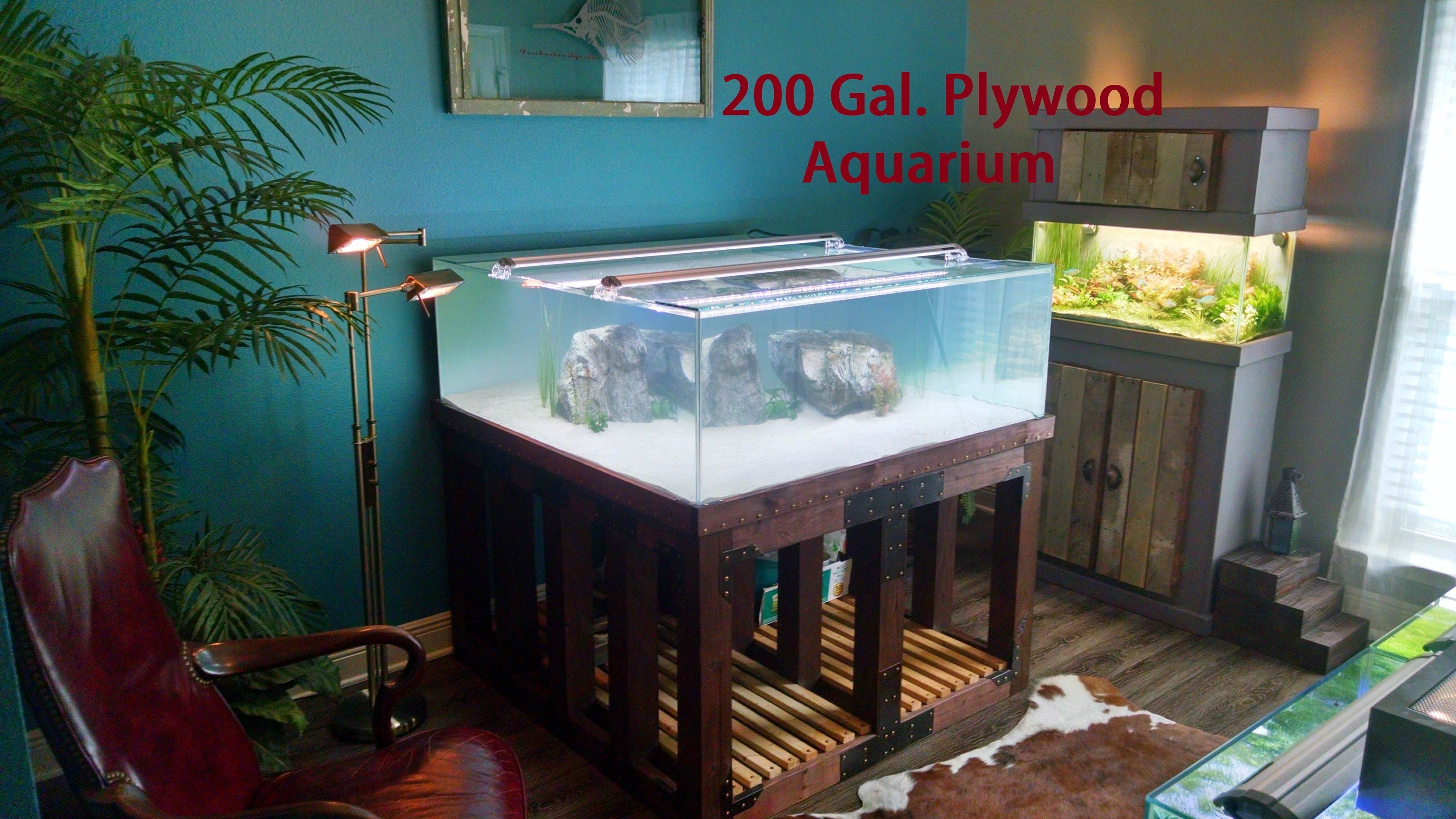 Fish in tank swimming - 200 Gallon Plywood Bottom Aquarium Aquarium Fish And Setup