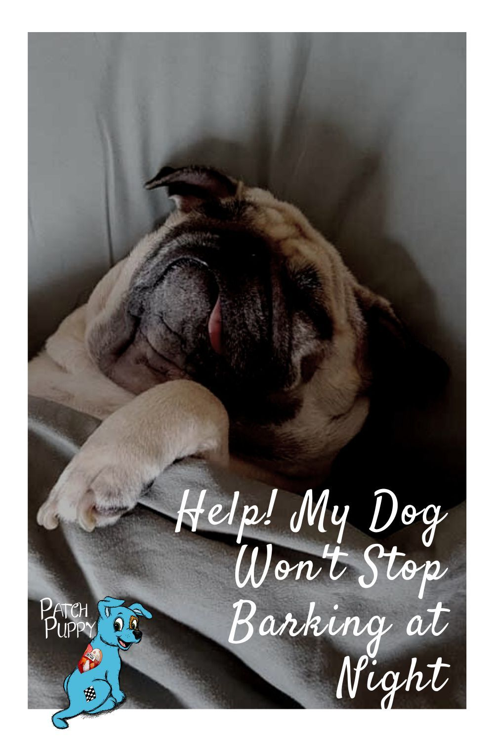 Help My Dog Won T Stop Barking At Night Patchpuppy Com In 2021 Dogs Dog Barking At Night Sick Dog