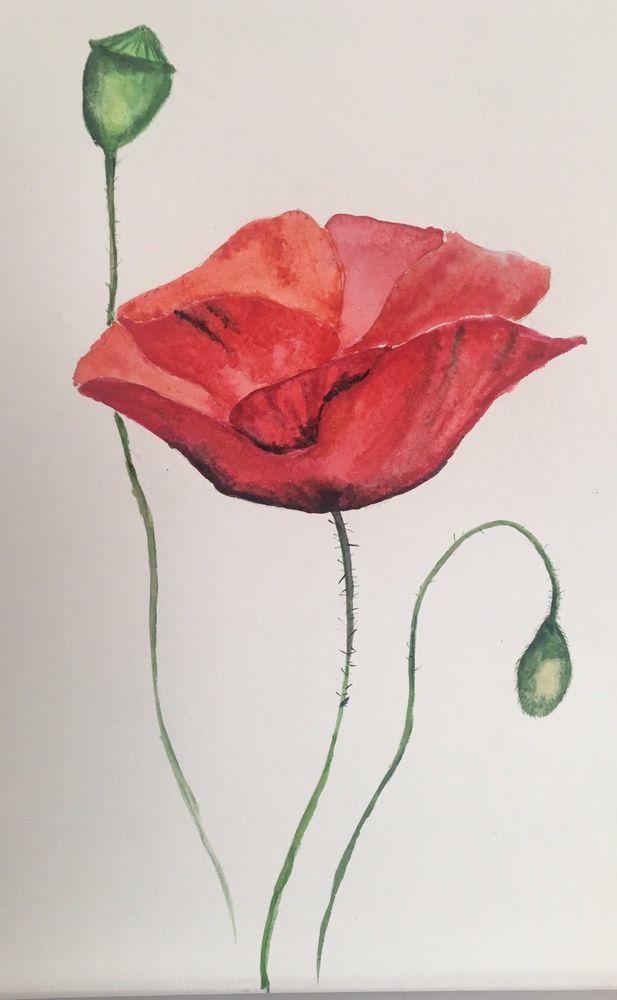 Mohn Poppy Blumen Original Aquarell Watercolor Flowers A4
