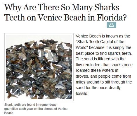 venice fl shark tooth - photo#18
