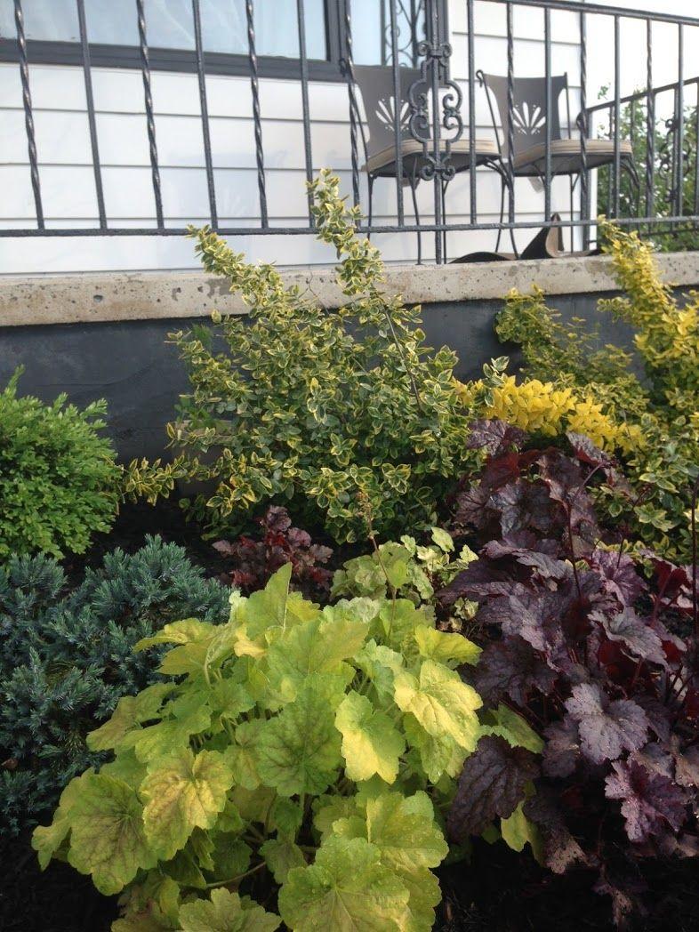 The Importance Of Evergreen Shrubs In Your Mixed Border Pretty Purple Door Perennial Garden Plans Garden Planning Perennial Garden