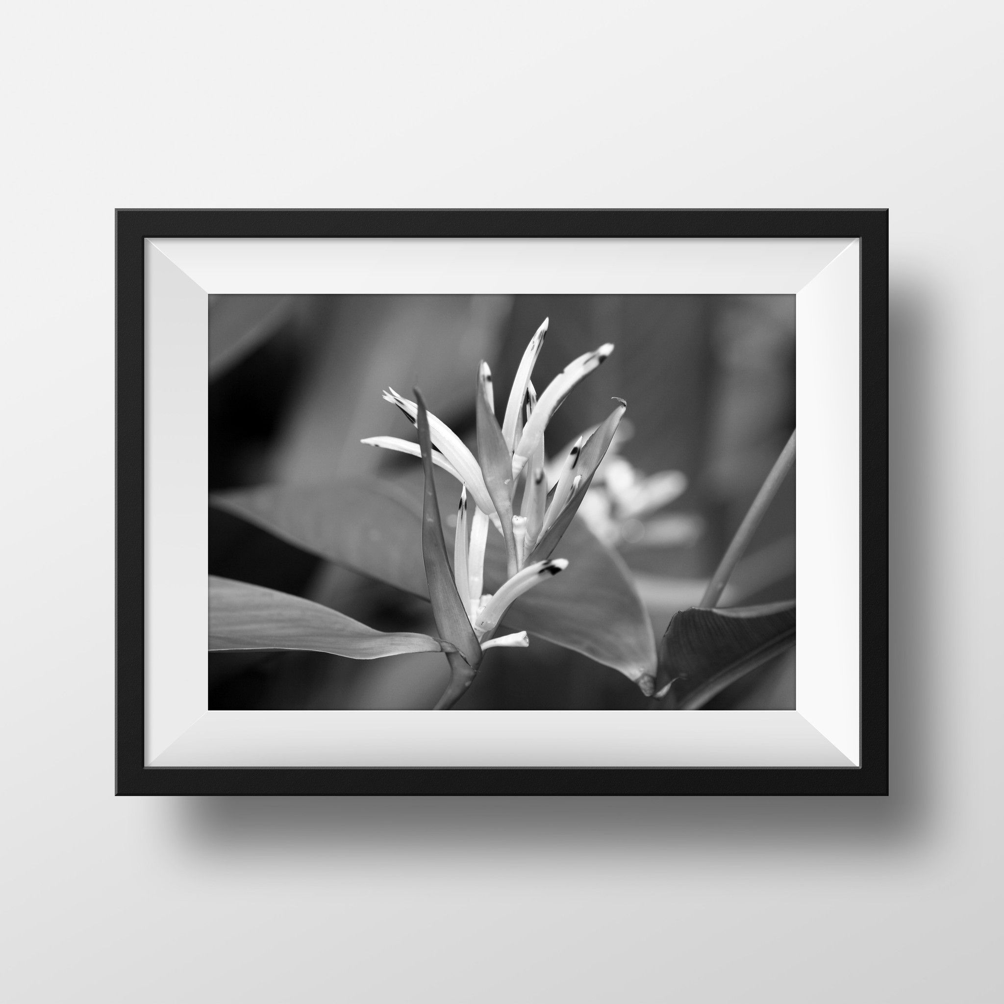Bird of Paradise Photo, Nature Photography, Black + White