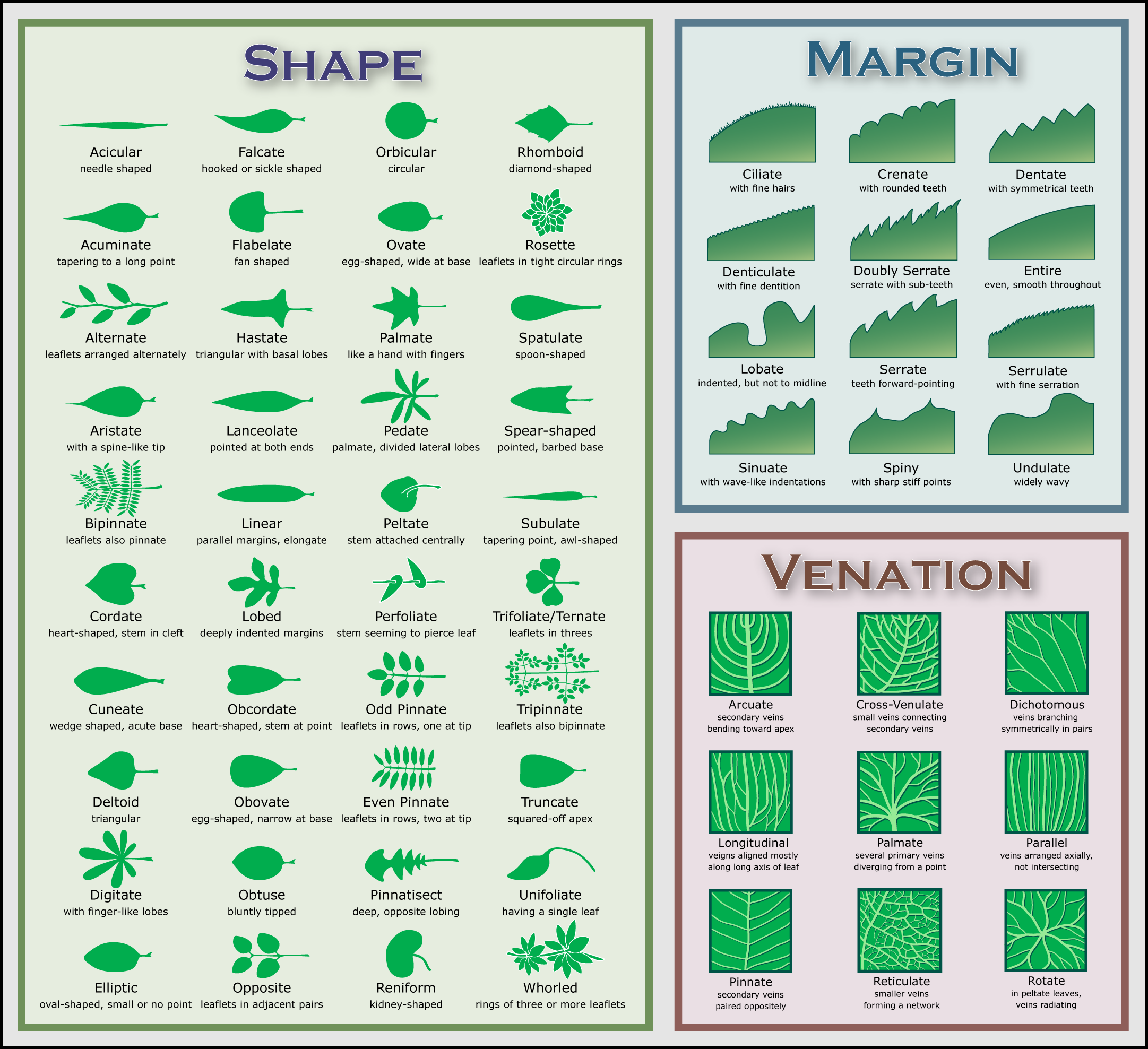 Leaf Chart Native Plants For A Cape Cod Garden