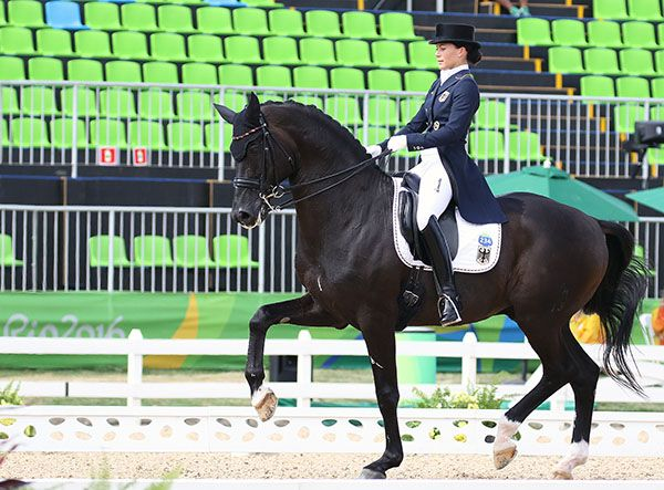 Kristina Broring Sprehe On Desperados Frh In 2020 Dressage Horse Love Horses
