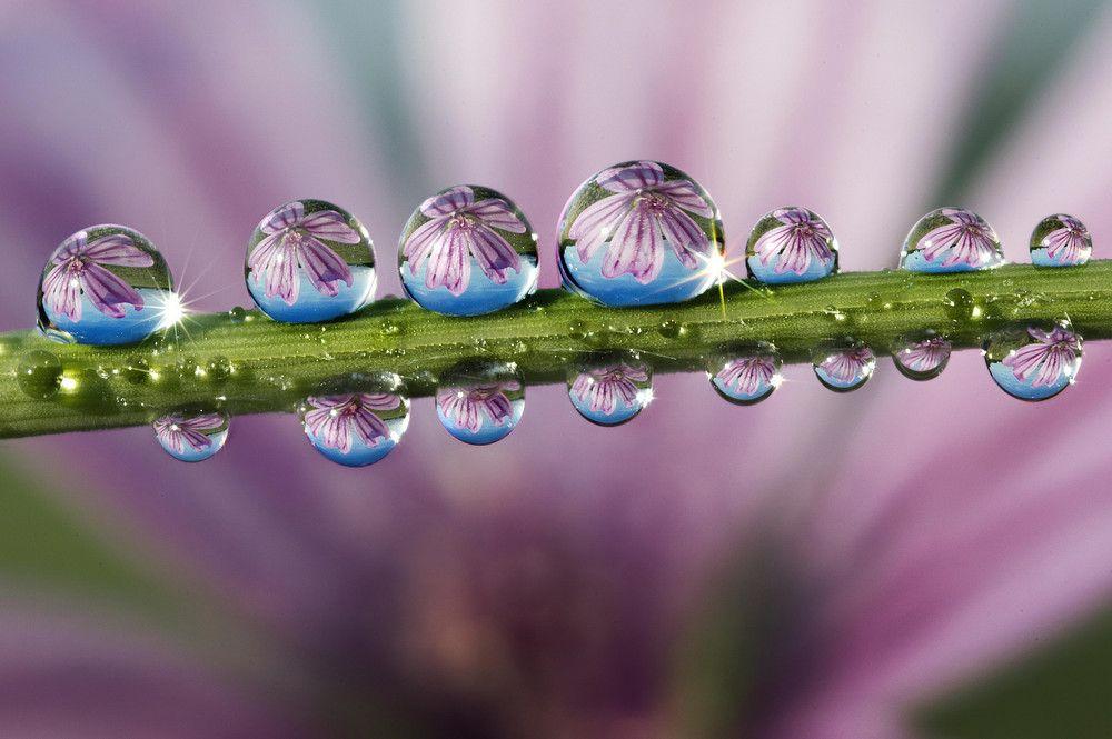 Картинки капли воды на цветах