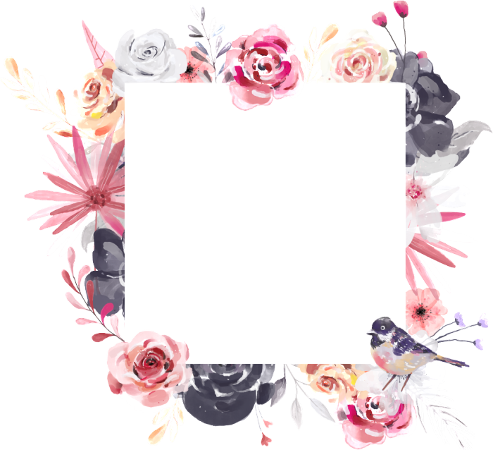 rose,pink,white,watercolor,free vector,transparent,flower