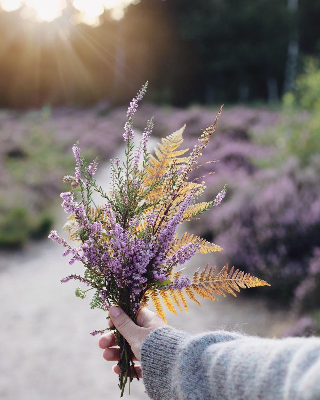 Janne On Instagram England Summer Wildflowers Foraging Bouquet Flower Aesthetic Pretty Flowers Botanical Illustration Vintage