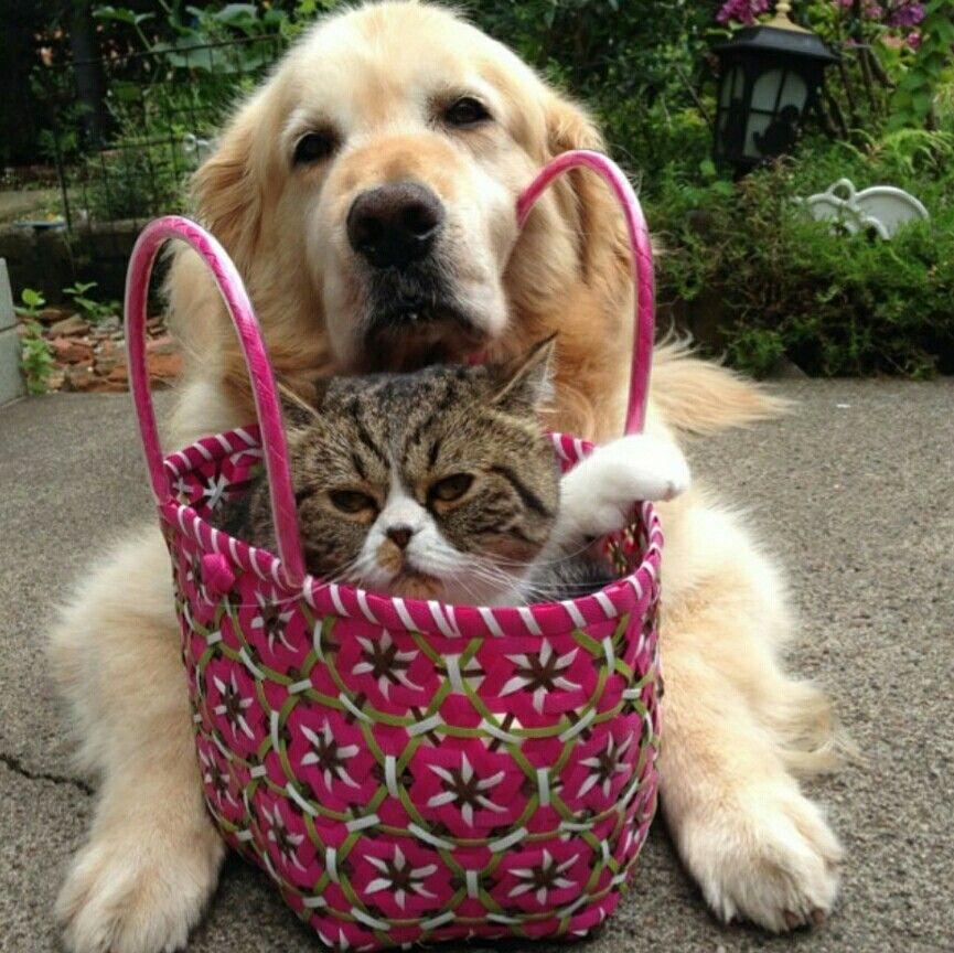 Кот с собакой могут подружиться