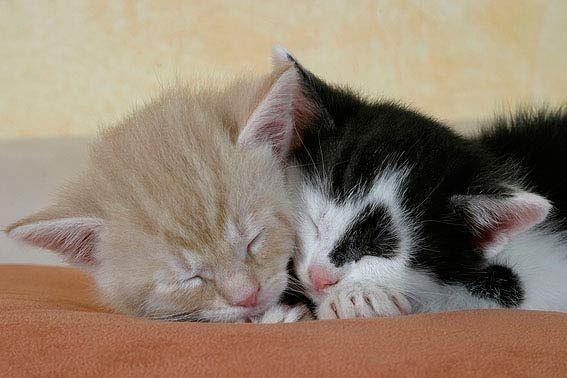 Kitten Weisse Katzen Katzen Katzenbabys