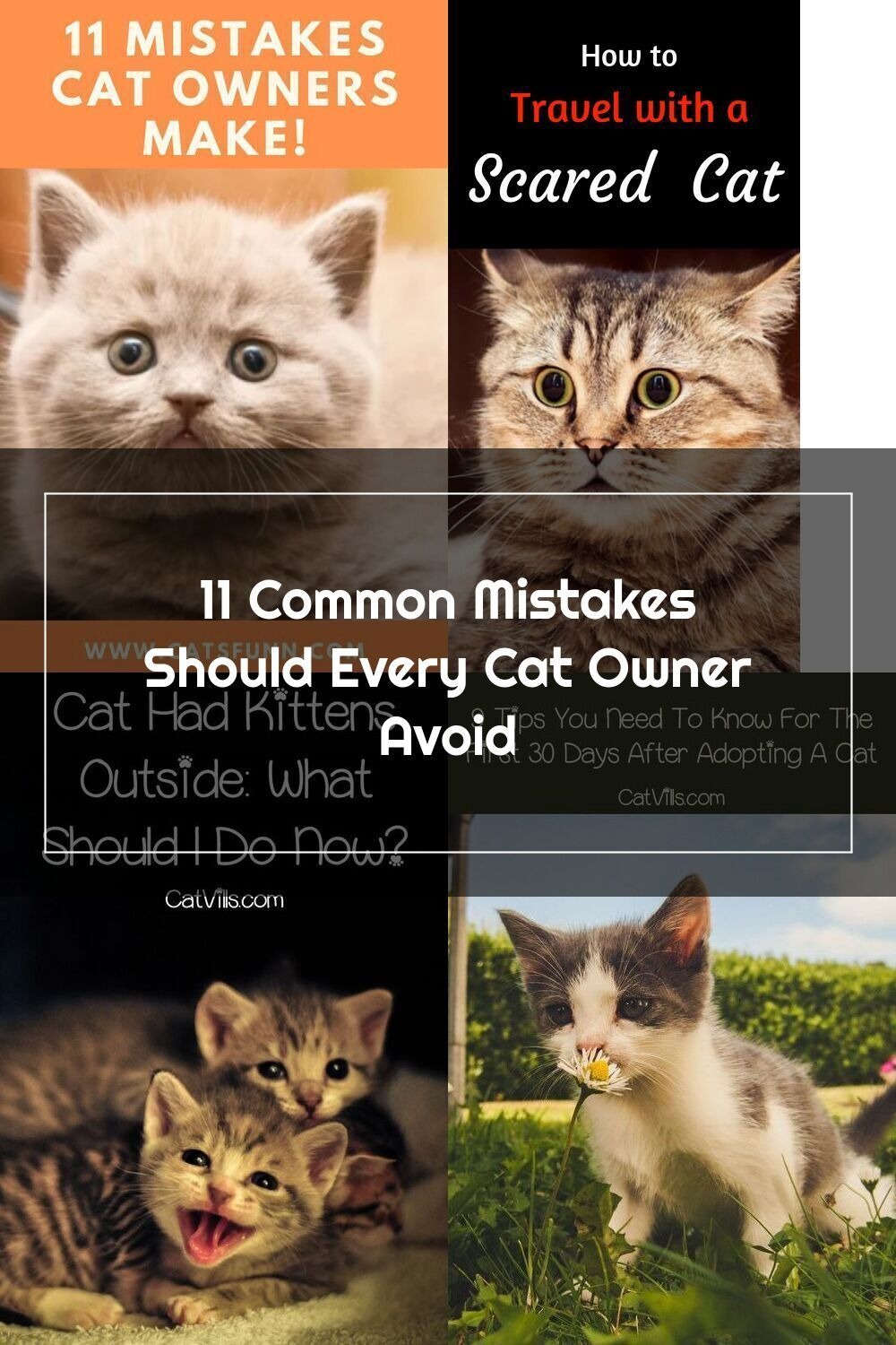 Our Goal Is That All Cats Are Safe Sound And Healthy Let S Go Through Some Of The Most Common Mistakes We Make As Pet Ca In 2020 Cats Outside Cat Adoption