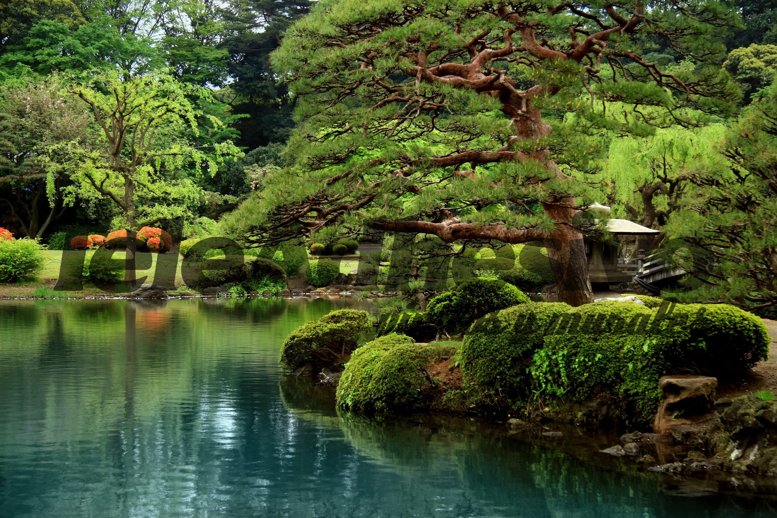 Jardines japoneses buscar con google jardines for Jardines japoneses pequenos