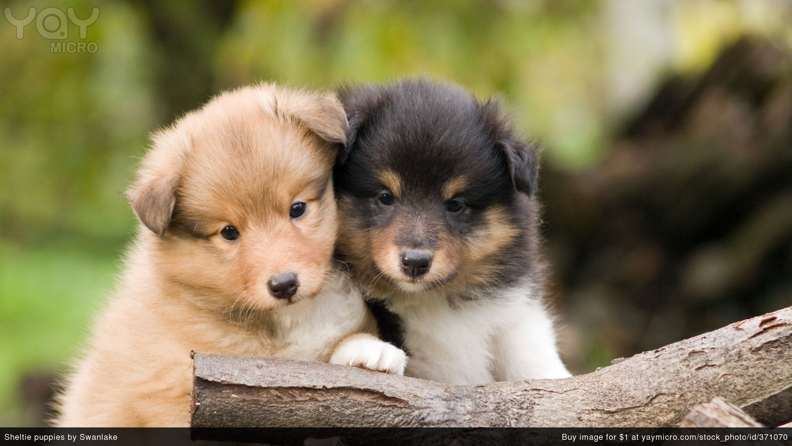 cute pups puppies wallpaper cute pictures of puppies wallpapers wallpapers