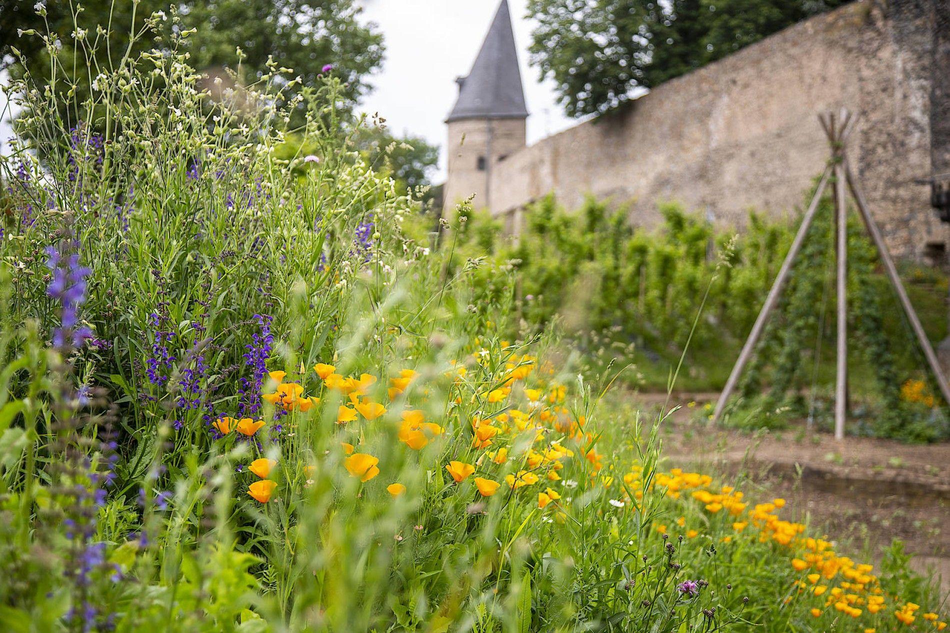 Gemuse Fur Alle Die Essbare Stadt Bodendecker Wildblumen Andernach