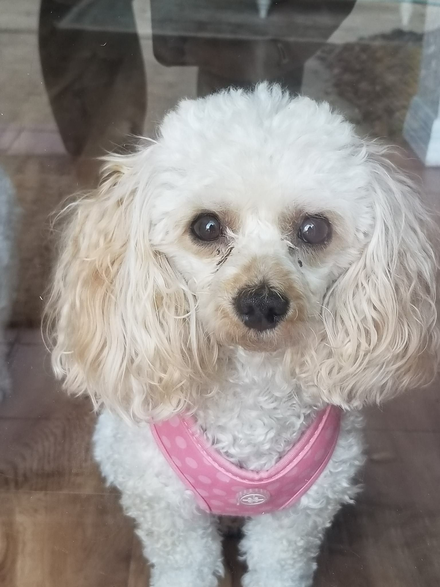 Pin On Florida Us Lost Dog Registry