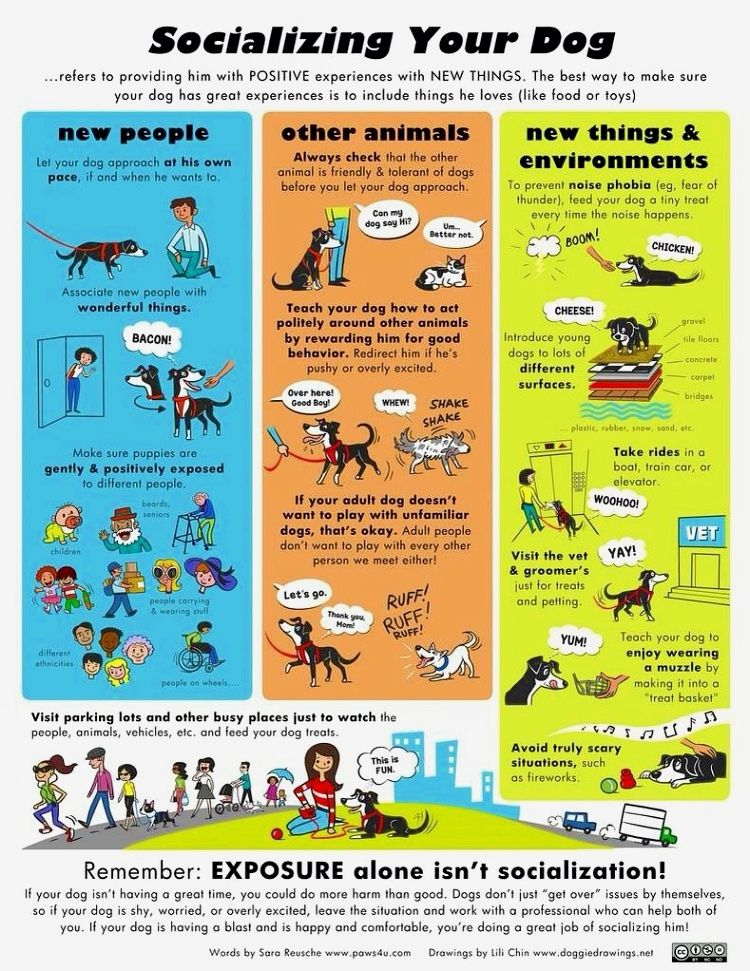 Dog training guide it is very easy to teach a pooch to