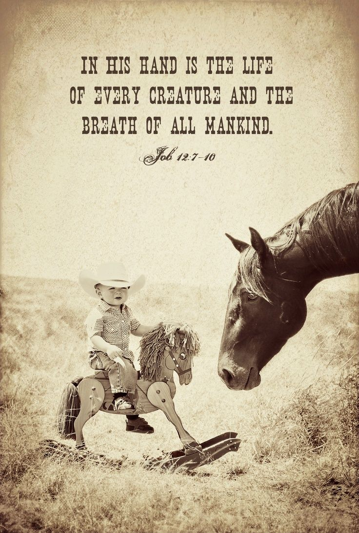 Cowboy Love Quotes Job 1210 For The Life Of Every Living Thing Is In His Hand And