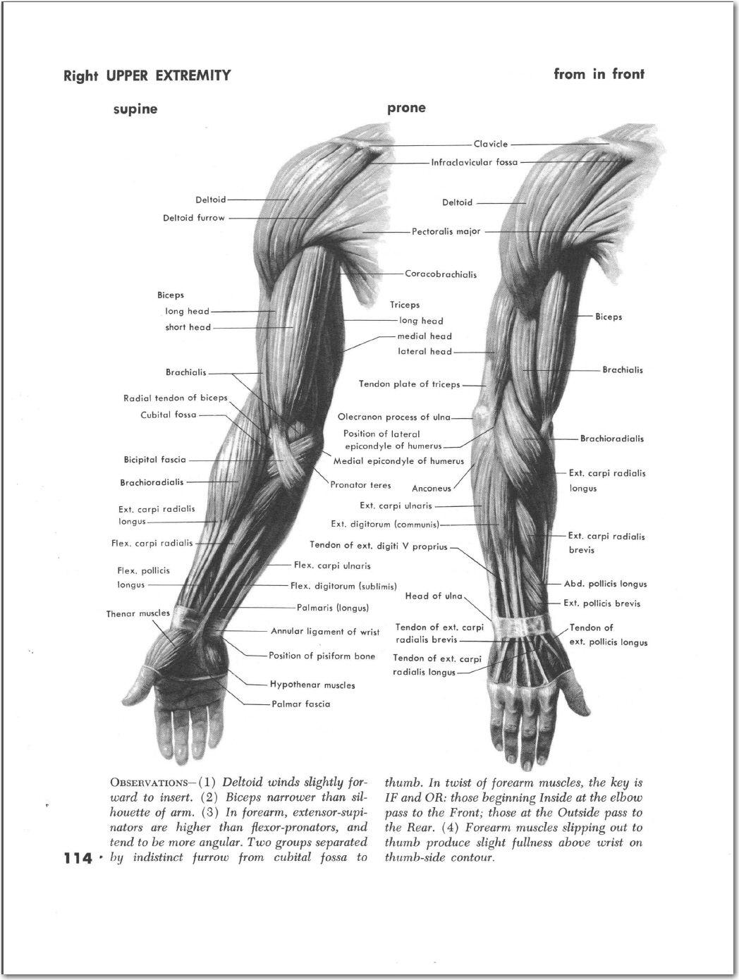Pin de Luis Marulanda Ramirez en anatomia | Pinterest | Anatomía y ...