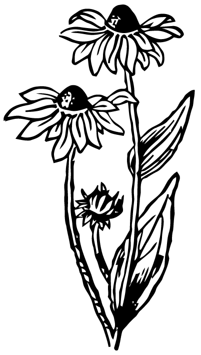 Free Vector Art Black Eyed Susan Images From