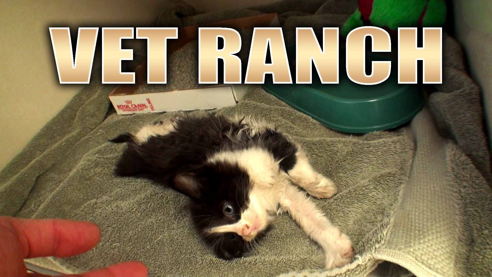 Kitten Walks On Two Legs Losing A Pet Kitten Silly Pictures