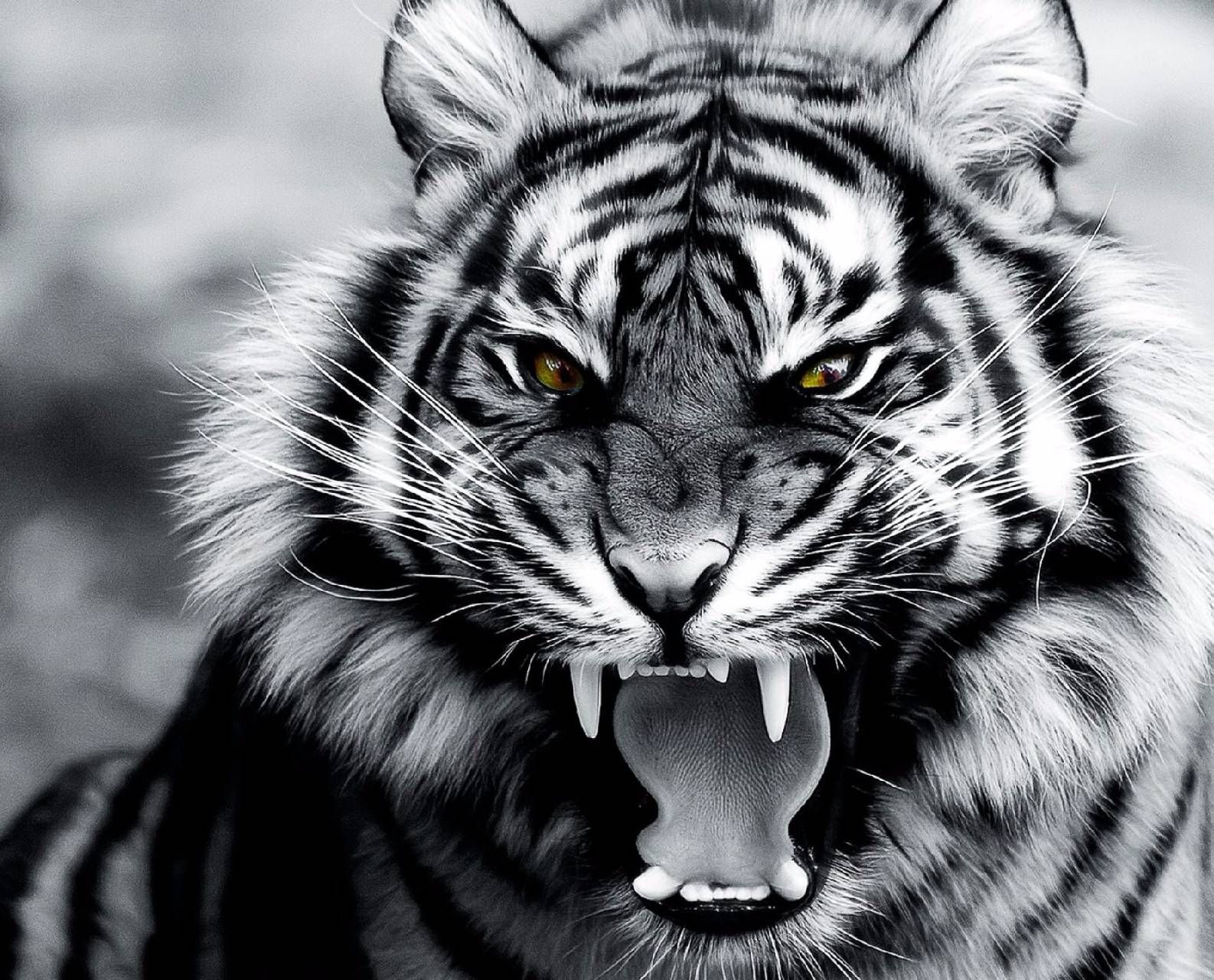 Download Roar Of The Tiger Wallpaper By Xavier Triplex 07 Free On Zedge Now Browse Millions Of Popular Tiger Wallpaper Tiger Tattoo Images Tiger Pictures Tiger tattoo wallpaper free download