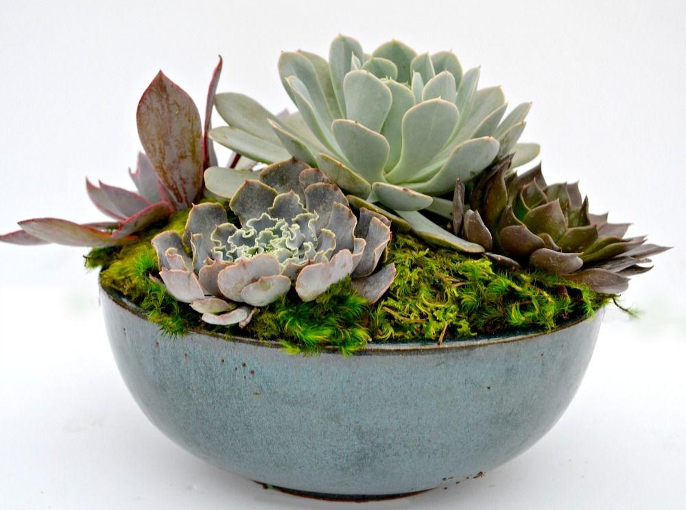 Succulent Centerpiece Wedding Flowers Succulent