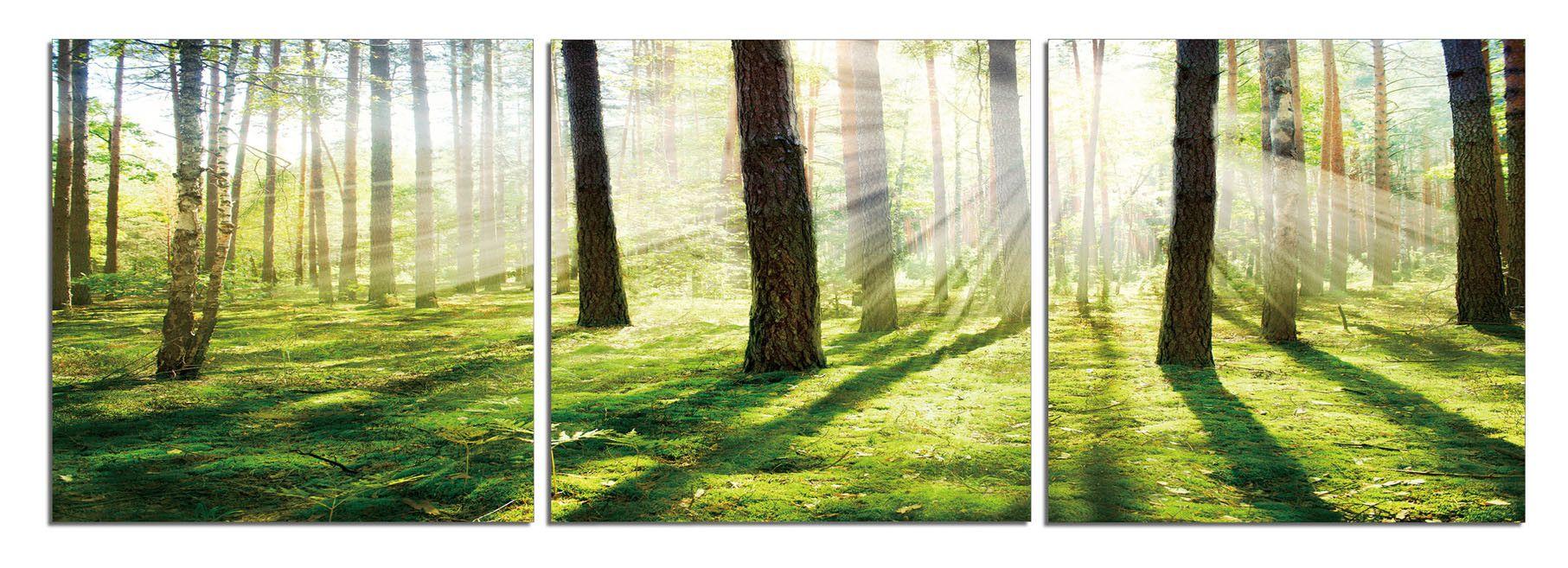 Sunrise Reflection | Trees, Its cold and Landscapes - Sunrise Reflection