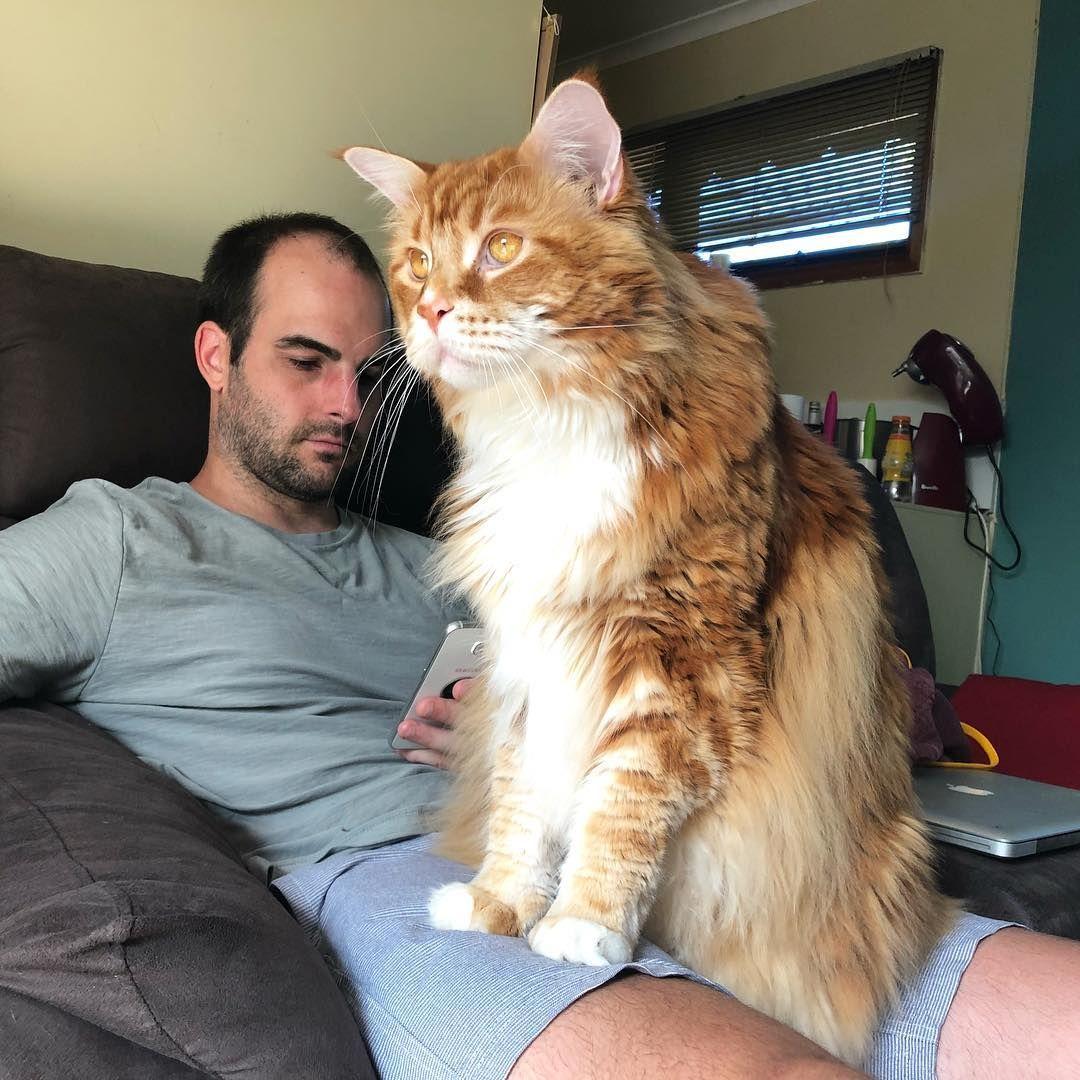 Pin On Kitty Love