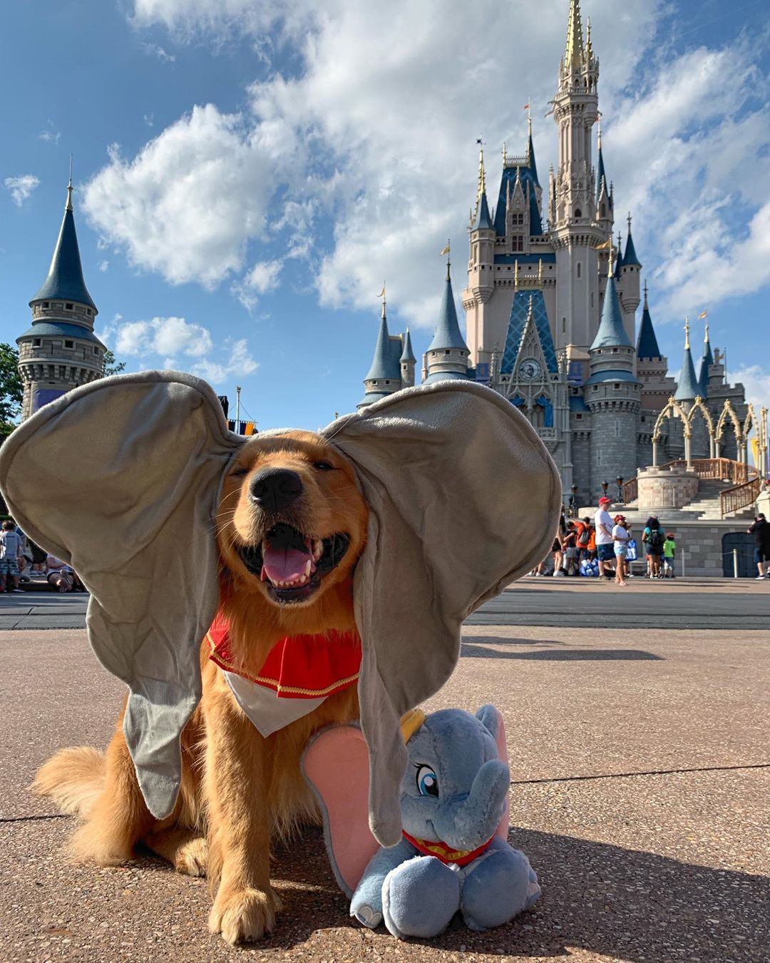 You'll Never Guess What Henry The Service Dog Did On His Trip To Disney World – Motto •Mantra • Quotation