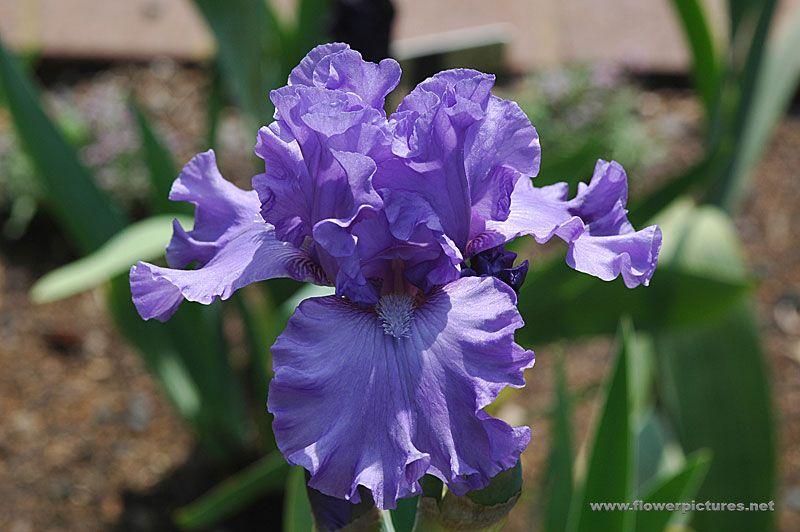 Iris Sudden Impact I Love You Grandma B These Are a Few of My