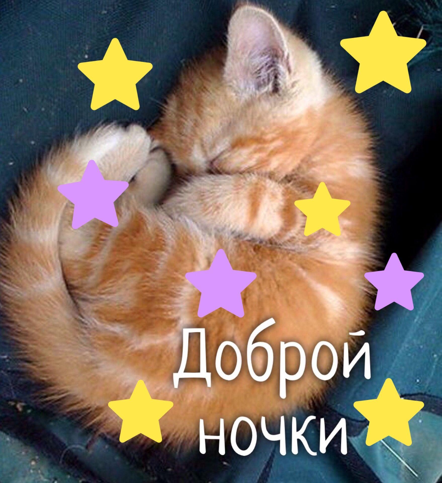 Спокойной ночи картинки для девушки прикольные