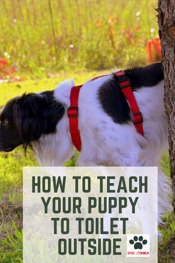 How To Teach Your Puppy To Toilet Outside Just Like We Invest
