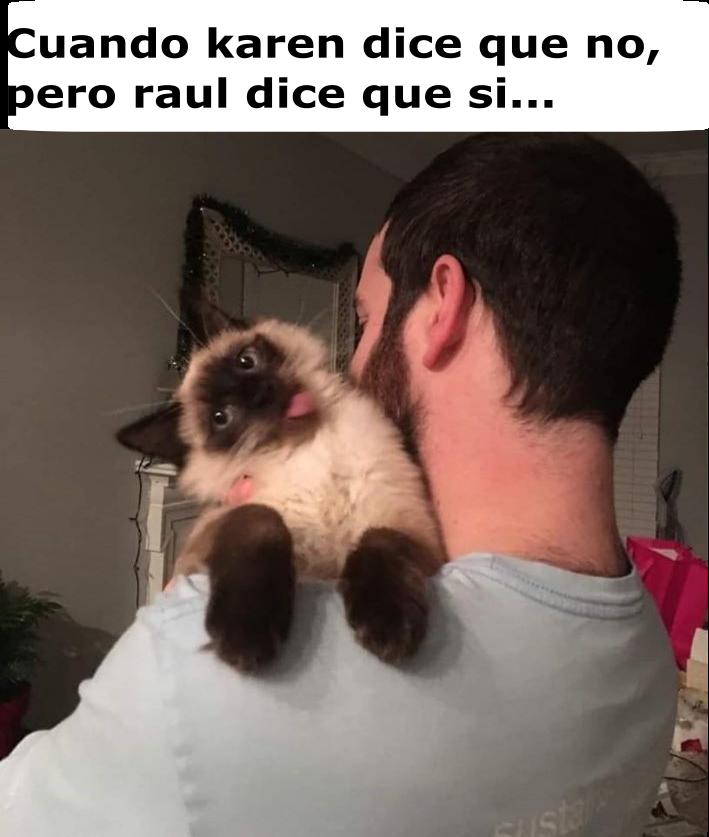 Memes de karen y su gato Segunda parte