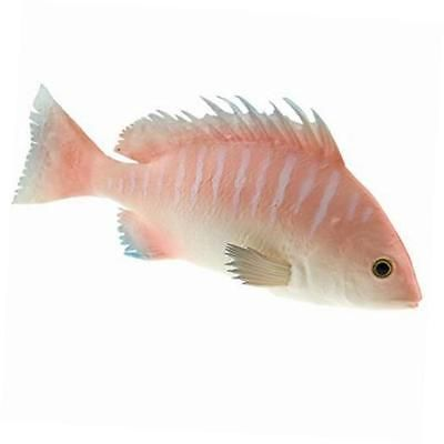 Homes for Fish aquarium Pinterest Aquariums and Fish - halloween fish tank decorations
