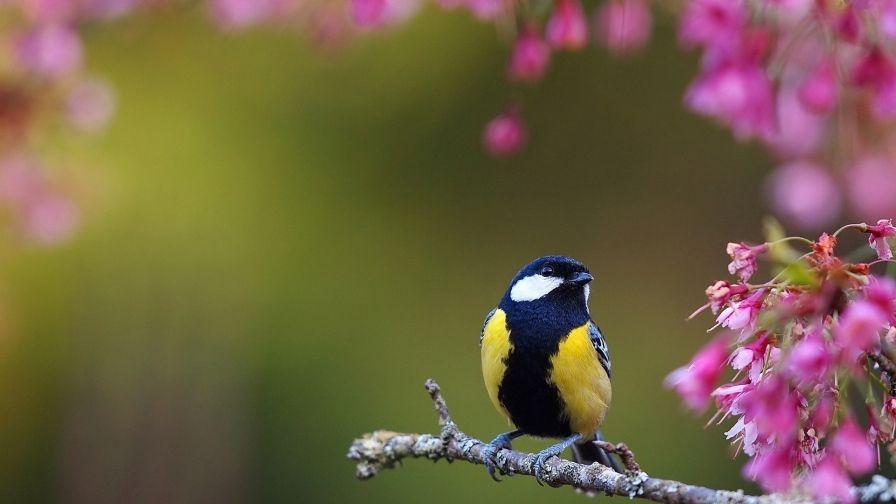 Beautiful Flower Bird Hd Wallpaper Download Spring Wallpaper Spring Flowers Wallpaper Spring Flowers