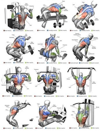 top 12 exercise for massive back anatomy  gym workout