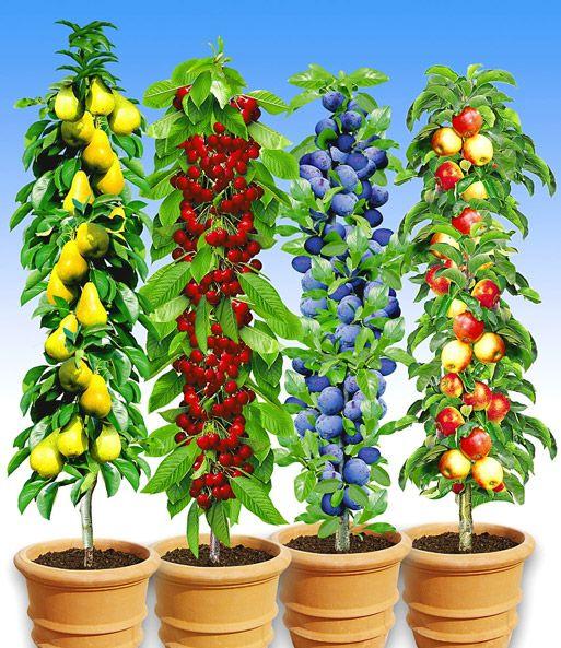 Saulenobst Kollektion Top Pflanzen Kaufen Baldur Garten Pflanzen Baume Pflanzen Baumgarten