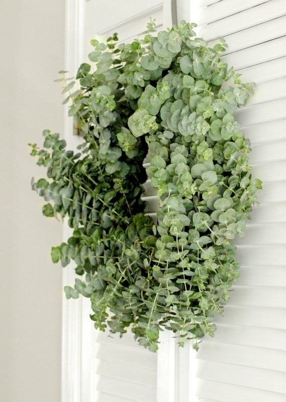 Photo of Fresh Baby Blue Eucalyptus Wreath – Greenery Wreath – for Front Door, Wall, Window, Home Décor (Free Shipping) – various sizes available