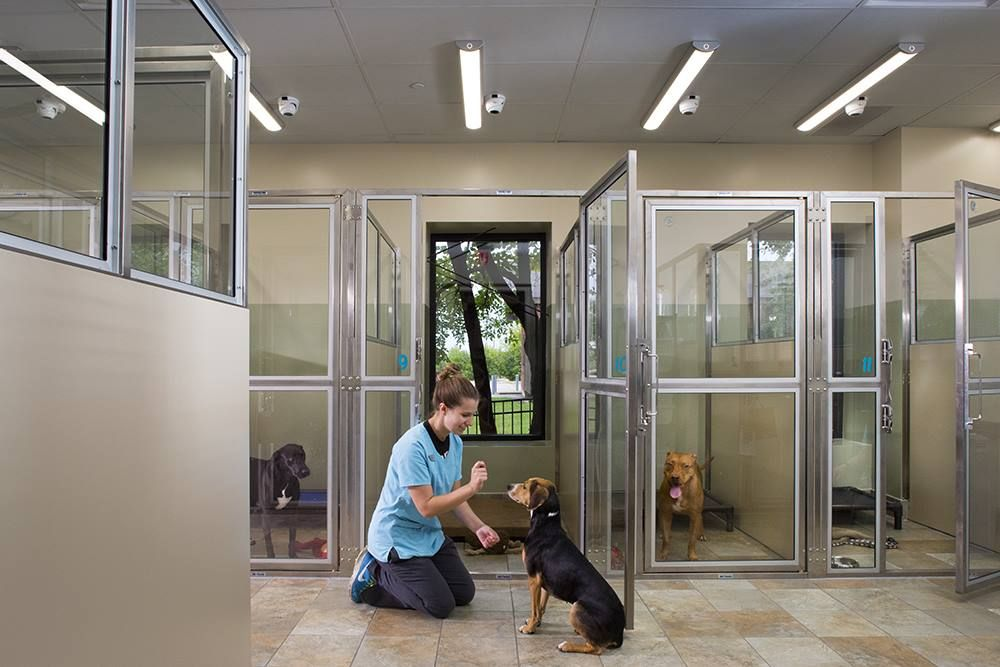 Veterinarian In St Charles Dog Boarding Kennels Dog Boarding Facility Hospital Design