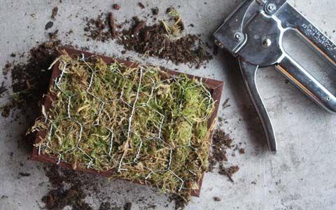 How to Make a Succulent Sempervivum (Hens