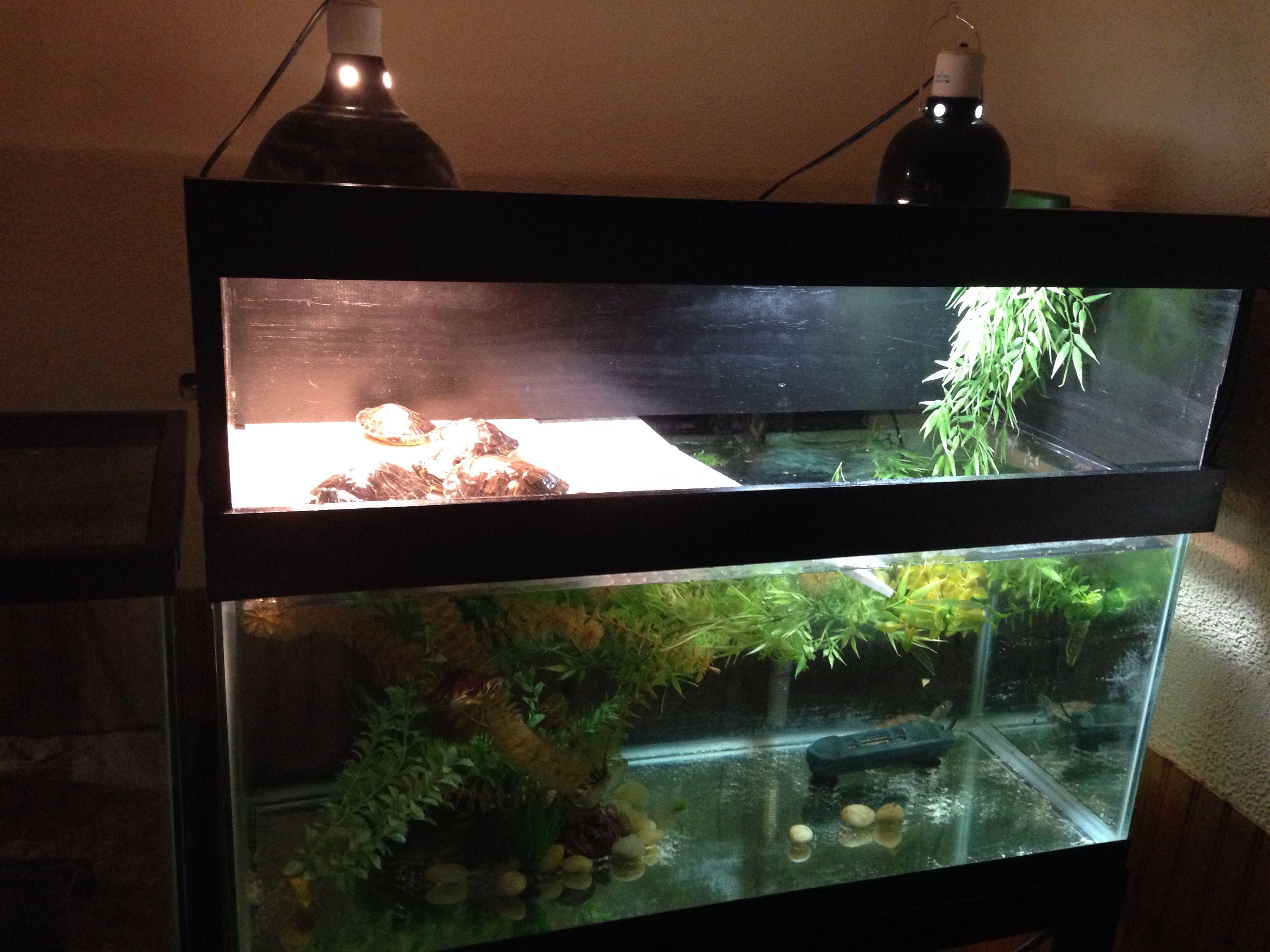 Diy turtle tank topper My projects Pinterest