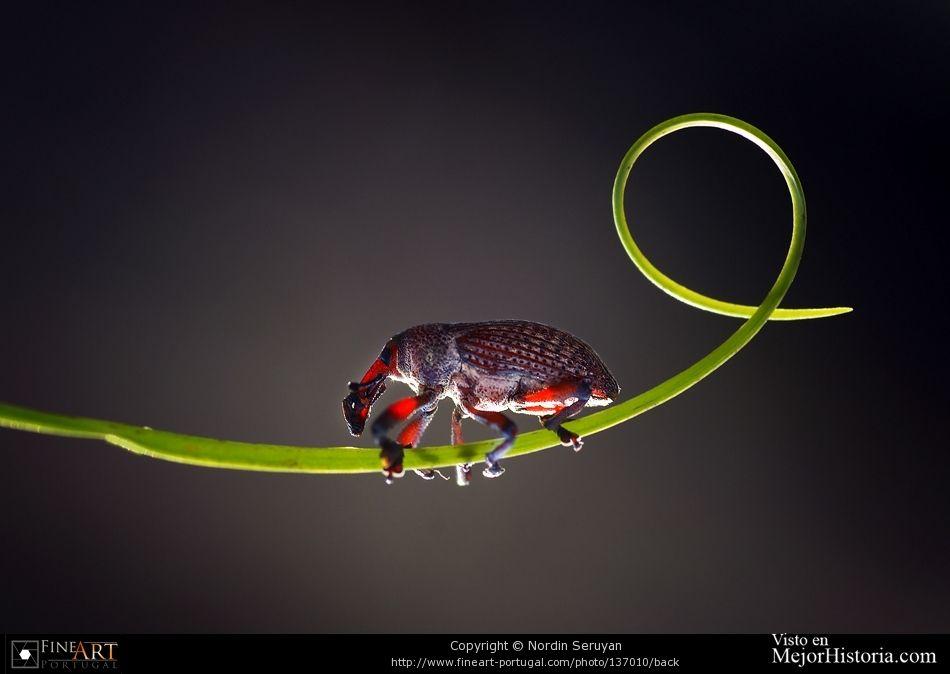 Asombrosas fotografias Macro de diferentes insectos, desde mantis religiosas, hasta caracoles o libélulas. Personalmente no es que me gusten mucho lo...