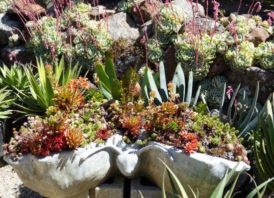 bizarre succulents