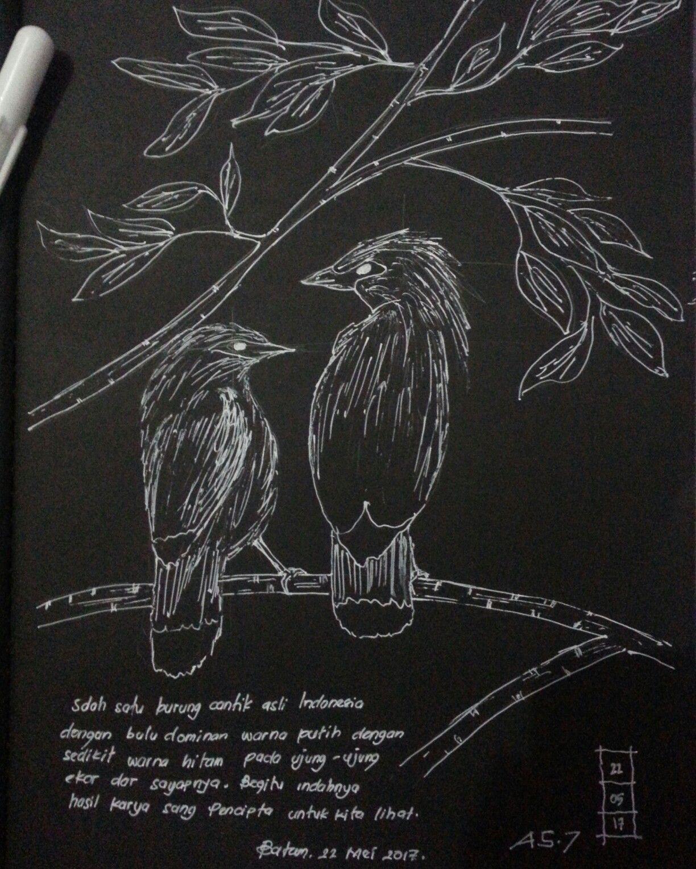 Fast Sketch Burung Jalak Bali Jalak