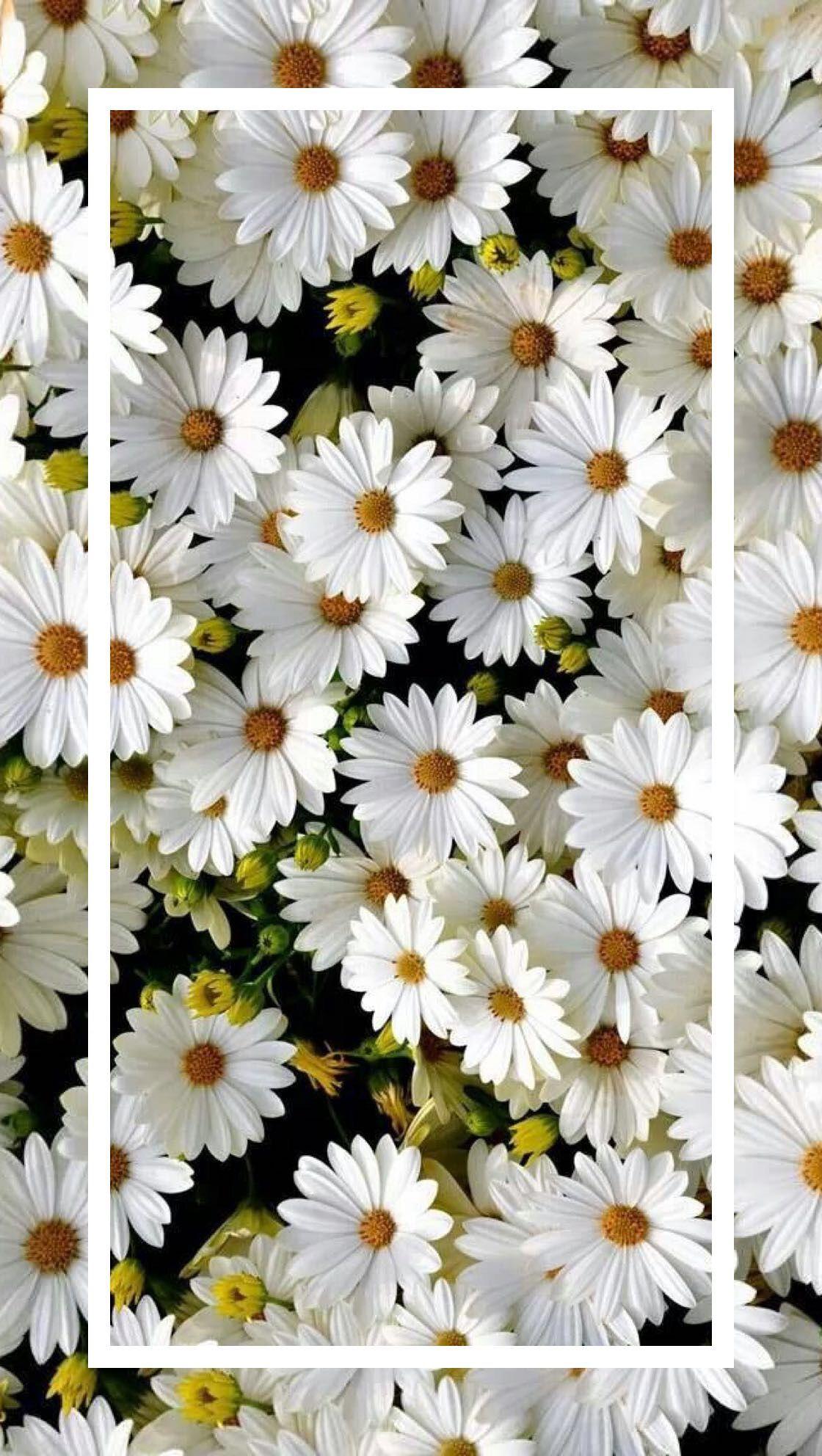 Pin By Dipti Dhopiskar On Beautiful Flowers Fondo Pantalla Celular