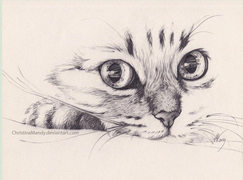Marinello a matita gatti e amici pinterest matita for Lupo disegno a matita