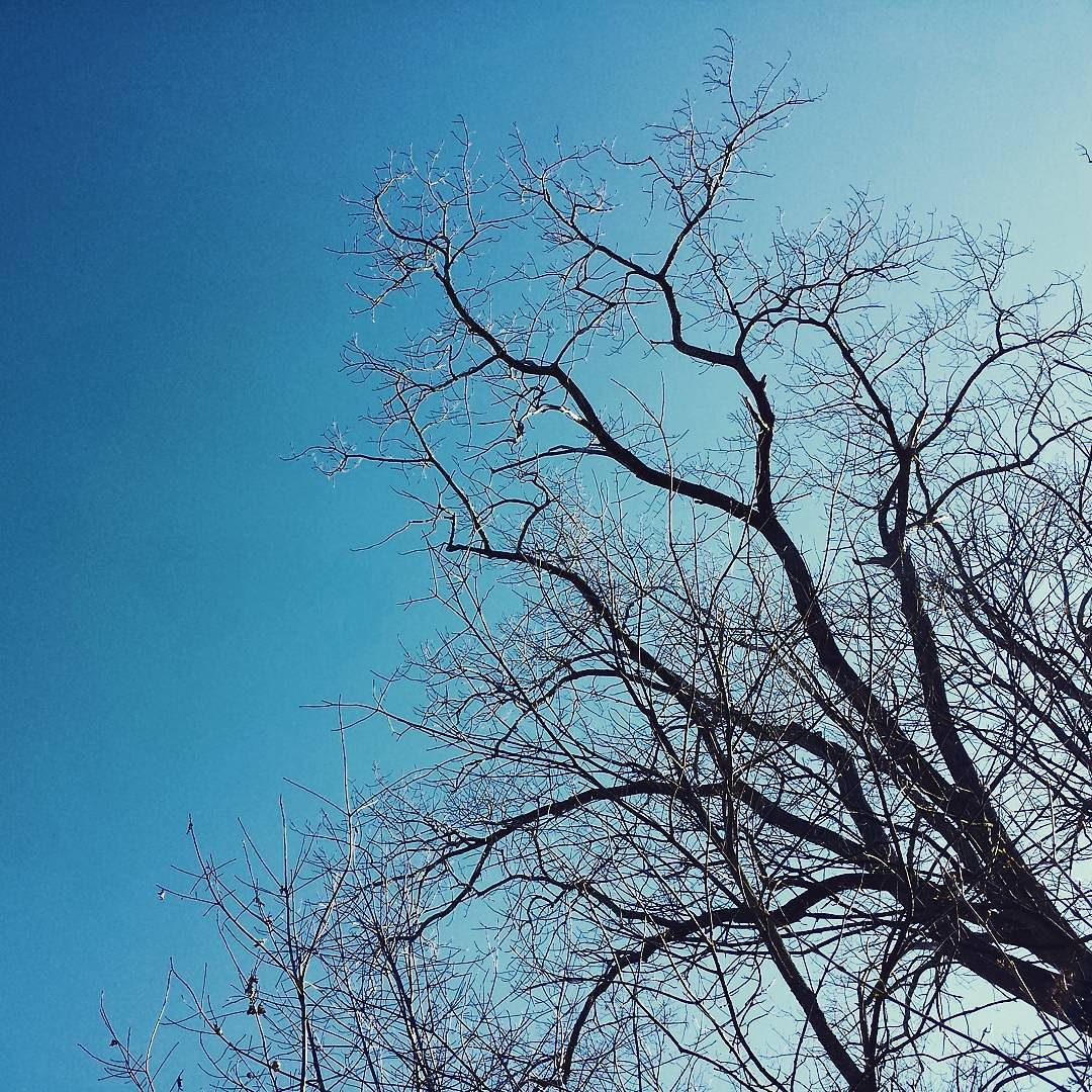 Still leafless #burchfieldnaturecenter #westseneca #wny