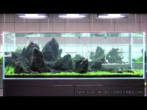 Takashi Amano Beautiful Iwagumi style Aquascape | Aquarium ...