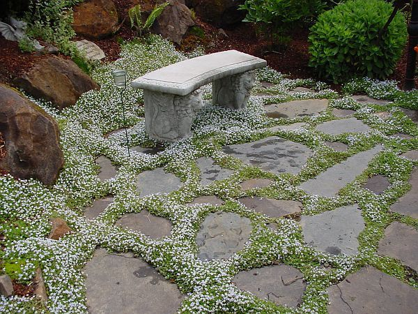 20 Plants for garden pathways which can handle foot traffic
